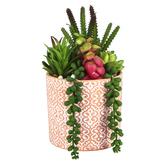 Artificial Succulents in Ornate Pot, Plastic & Terra Cotta, Green & Red, 6 3/4 x 10 inches