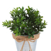 Artificial Boxwood Plant in Tin Bucket, 6 1/2 x 7 inches