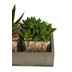 Succulent Trio in Wooden Tray, Plastic, Green, 10 x 4 1/4 x 7 inches