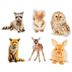 Schoolgirl Style, Woodland Whimsy Animals Cut-Outs, 3.30 to 5.50 Inches, 6 Designs, 36 Pieces