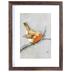 Orange Winter Bird Framed Wall Decor, Plastic, Brown, 14 x 11 x 1 3/16 inches