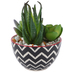 Artificial Succulents in Round Ceramic Pot, Black and White, 5 1/2 x 4 1/4 x 3 1/2 inches
