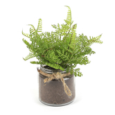 Artificial Fern in Glass Pot, Green & Brown, 9 x 3 1/2 x 3 1/4 inches