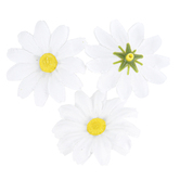 Brother Sister Design Studio, Daisy Filler, 2 x 2 Inches, 50 Daisies