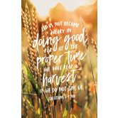Salt & Light, Let Us Not Become Weary Church Bulletins, 8 1/2 x 11 inches Flat, 100 Count