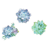Schoolgirl Style, Simply Stylish Succulents Jumbo Cut-Outs, 12 Inches, 12 Pieces