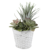 Artificial Succulent in Honeycomb Pot, Plastic & Cement, Green & White, 8 x 8 1/2 inches