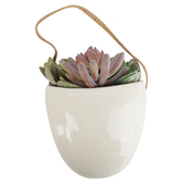 Succulent and Sedum in White Pot Wall Decor, Green/White, 8 Inches
