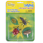 Insect Lore, Ladybug Life Cycle Figurines, Multi-Colored, Ages 4 Years and Older, 4 Pieces
