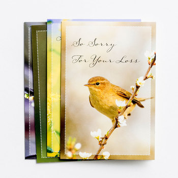 DaySpring, Comforting Thoughts Boxed Sympathy Cards, 12 Cards with Envelopes