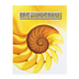 BJU Press, Pre-Algebra 8 Student Text (2nd Edition)