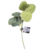 Brother Sister Design Studio, Oh Baby Eucalyptus Leaf Pick, Green, 9 1/4 x 3 inches
