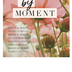 Salt & Light, Moment By Moment Church Bulletins, 8 1/2 x 11 inches Flat, 100 Count