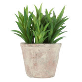 Artificial Leafy Succulent in Terra Cotta Pot, Plastic, Green, 4 1/4 x 5 1/4 inches