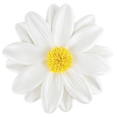 Brother Sister Design Studio, Yellow & White Daisy, 8 Inches