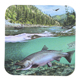 Legacy Publishing Group, Swimming King Salmon Coaster, 3 3/4 inches