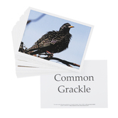 Memoria Press, Birds Flashcards, 31 Cards, Grades 4-7