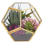 Geometric Succulent Garden, Glass, Gold, 6 x 6 Inches