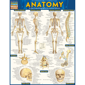 BarCharts Inc, Anatomy Laminated Quick Study Guide, 8.5 x 11 Inches, 6 Pages, Grades 9 and up